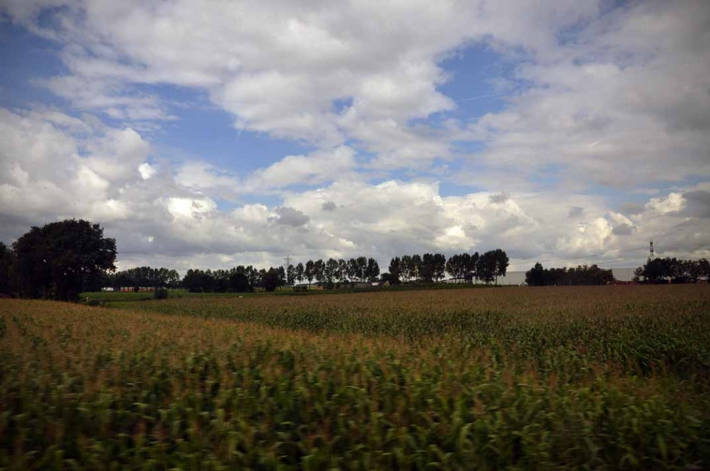 Rolling Corn Fields of Belgium
