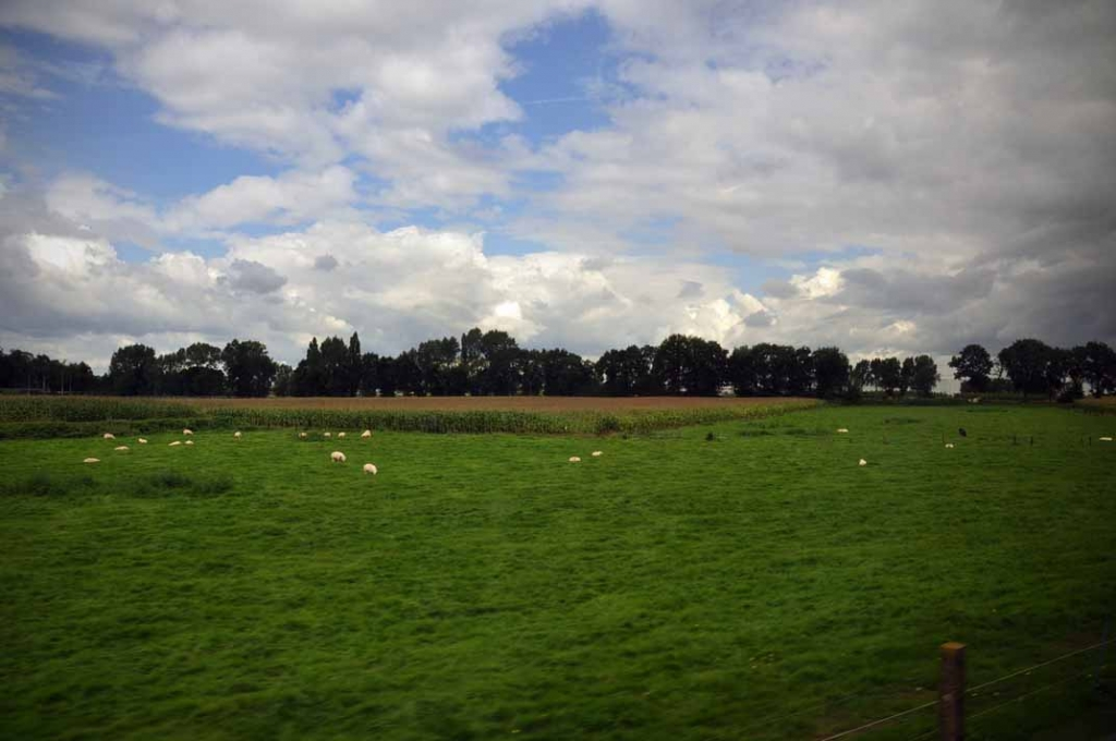 Green pastures in Belgium