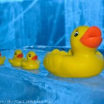 Ducks on an Ice Bar