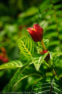 Akaka Falls Red Flower 2