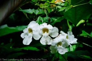 Akaka Falls White Flowers