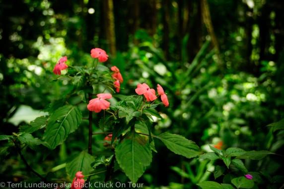 Flowers in Kolekole Park