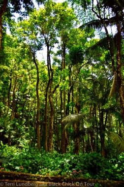 Kolekole Tall Trees