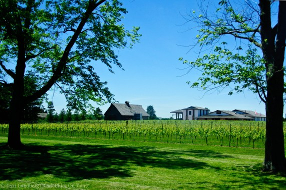 Vineyard Niagara-on-the-Lake