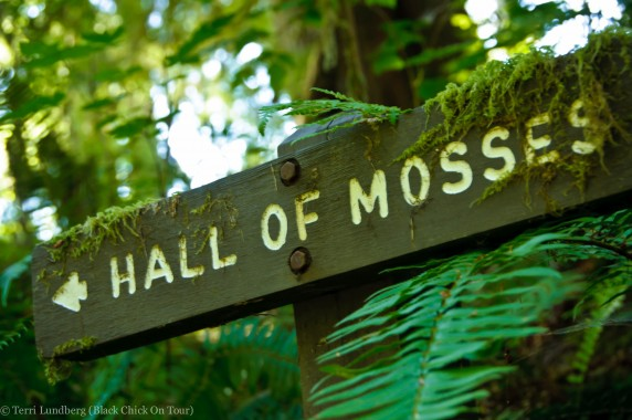 Hall of Mosses Sign - Hoh Rainforest
