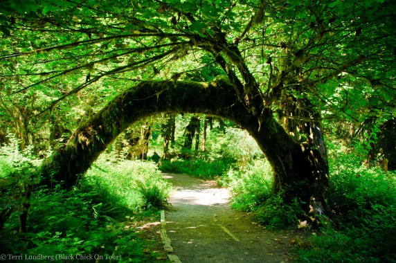 Tree Arch in Hoh Rainforest