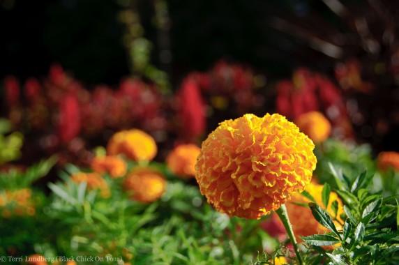 Missouri Botanical Garden Yellow Flower with Red