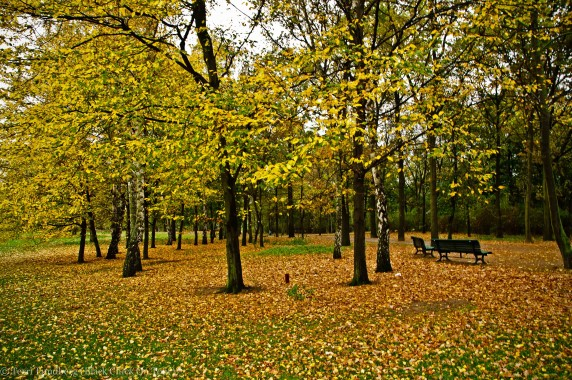 Fall Foliage at Tiergarten