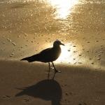 Photo Tour:  Sun Setting on Ocean Beach