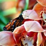 San Diego Hometown Tourist: Botanical Building Balboa Park